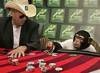 Monkey Poker
