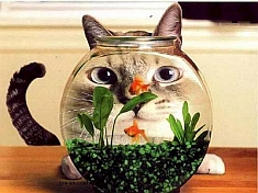 http://resources.pokerstrategy.com/2012/11/07/funny-cat-looking-through-fish-tank.jpg