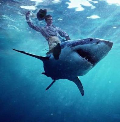 Верхом на акуле